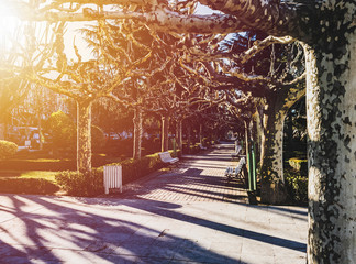 Platan-trees in Leon, Spain. Cozy cityscape