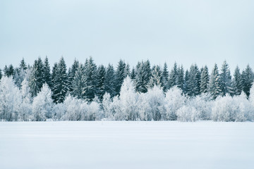 Foto op Canvas Lichtblauw Snowy countryside and forest in winter Rovaniemi