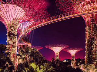 Trees at Gardens by Bay at Singapore city at night Fototapete