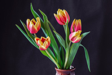 Colorful tulip bouquets in the vase on black background.