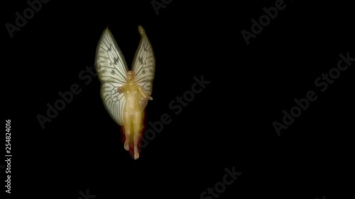 Fairy flying wings flapping   3d animation   Isolated black