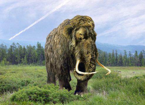 Mammoth cloned.