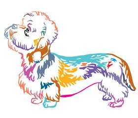 Colorful decorative portrait of Dog Dandie Dinmont Terrier vector illustration