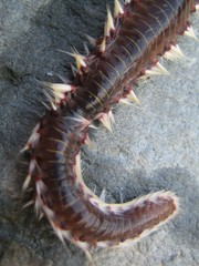 Sea life strange creature like an alien worm marco shoot background fine post card