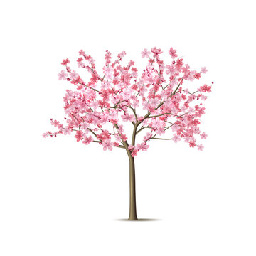 Vector realistic sakura tree with pink petal
