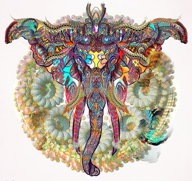 Elephant Illustration with patterns
