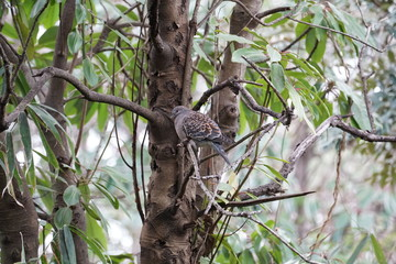 A pigeon on a tree