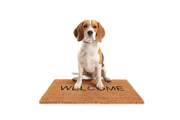 Cute beagle dog sitting on a brown welcome mat