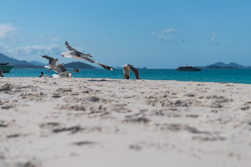 Fliegende Möwen am Sandstrand