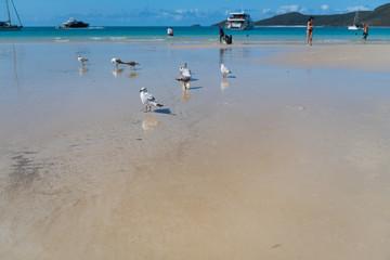 Möwen neben kleines Wasserbad am Strand