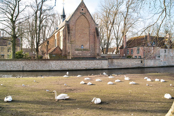 BRUGES, BELGIUM - FEBRUARY 17, 2019: Swans on the water canal of the city, view of the bridge and buildings of the Middle Ages
