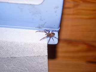 spider sitting on a roll of toilet paper