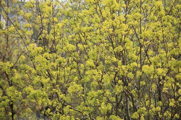 Photo sur Aluminium Bosquet de bouleaux tree at spring day
