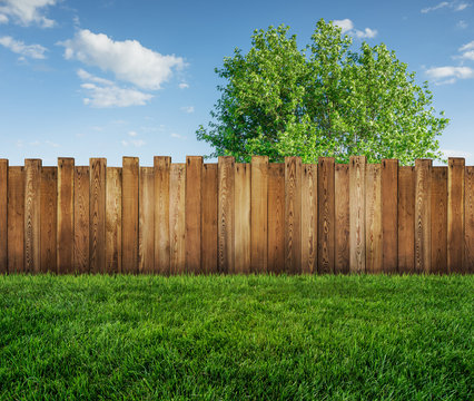 spring tree in backyard and wooden garden fence