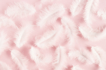 White feathers on pastel pink background. Flat lay, top view, copy space