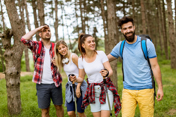 Group of four friends hiking together through a forest