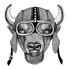 Buffalo, bison,ox, bull Wild animal wearing motorcycle, aero helmet. Biker illustration for t-shirt, posters, prints.