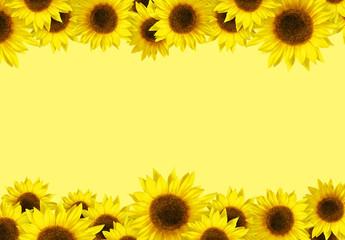 Spring Sunflower Border
