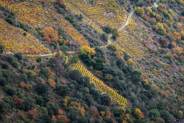Agricultural road between the vineyards of the Ribeira Sacra