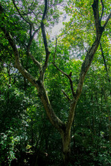 branched branches in rain forest at indonesia