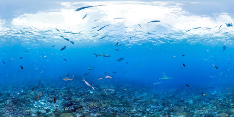 360 of fish and sharks over reef
