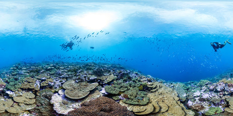 360 of diver over healthy coral in Palmyra