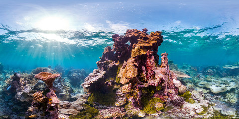 360 of coral head in Palmyra