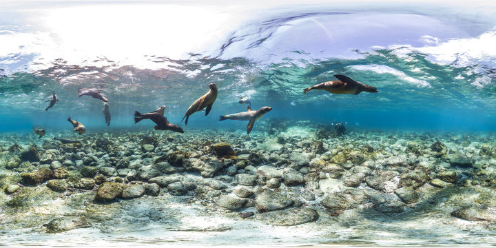 360 of sea lions in Galapagos