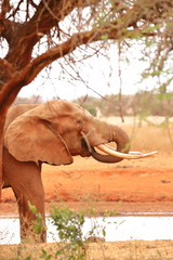 An elephant under a tree beside the water hole