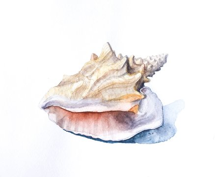 Hand drawn watercolor sea shell isolated on white background