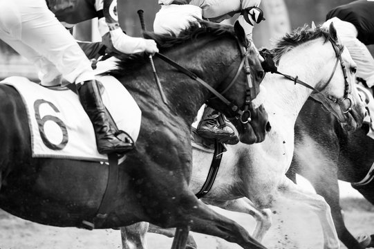 horse race championship detail closeup in monochrome