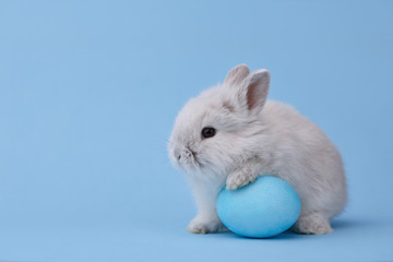 White Easter bunny with painted egg on blue background. Easter holiday concept.