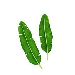 Banana leaves, tropical