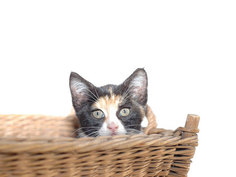 junge bunte Katze im Korb
