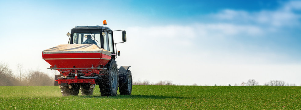 Agricultural tractor fertilizing wheat crop field with NPK