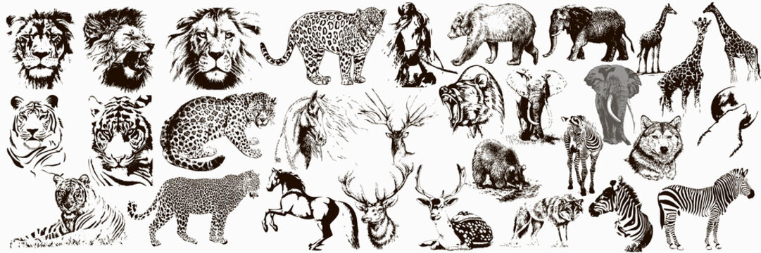 Big collection of wild animals. Exotic danger African. Tropical. Vector illustration on white background.