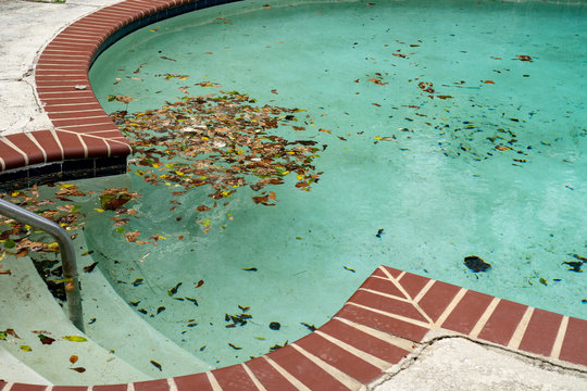 Dirty pool sits unattended covered in leaves