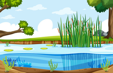 A nature swamp landscape