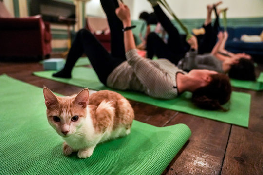 A cat sits on a yoga mat during a cat yoga class at Brooklyn cat cafe in Brooklyn