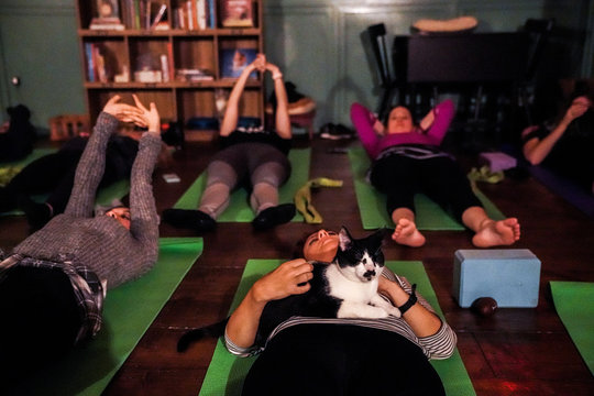 A cat sits on a participant during a cat yoga class at Brooklyn cat cafe in Brooklyn