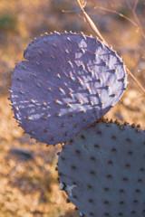 Prickly Purple Cactus