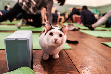 A cat sits on the floor during a cat yoga class at Brooklyn cat cafe in Brooklyn