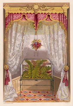 Wardian Case Containing Ferns, in a Window