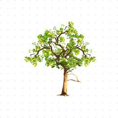 pear tree isolated illustration