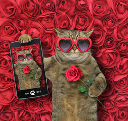 The funny cat in heart shaped sunglasses takes a selfie with red rose. Background of roses.