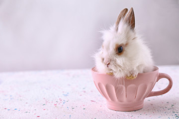 Cute fluffy rabbit in cup on table Wall mural