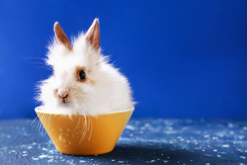 Cute fluffy rabbit in bowl on color background Wall mural