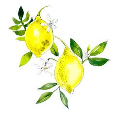 Lemons. Watercolor hand drawing illustration