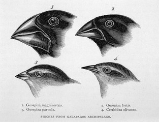 Galapagos Island Finches Observed by Charlesdarwin