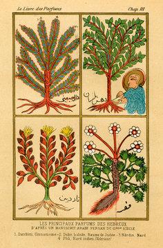 Herbs 12c Arab Ms